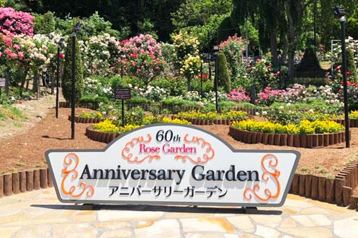 【花巻温泉バラ園】開園60周年記念 アニバーサリーガーデン