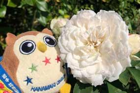 秋のバラさんが咲いてるホ~☆