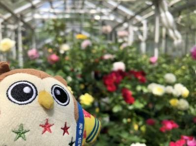 温室のバラとぼく