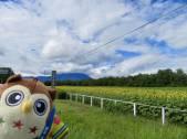 小岩井農場のひまわりを見てきたホー♪