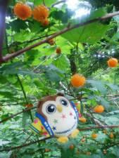 モミジイチゴを発見だホ~!