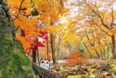 秋の花巻温泉をおさんぽだホー♪
