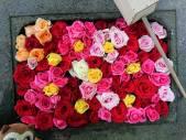 ちょうずのバラがきれいだホ!