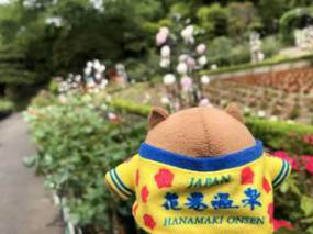 花巻温泉バラ園 開花状況(2018/5/31)