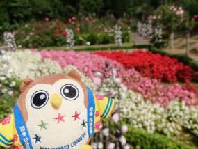 花巻温泉バラ園 開花状況(2018/9/14)