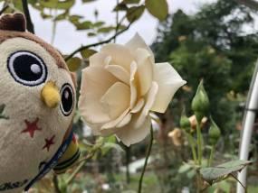 花巻温泉バラ園 開花状況(2020/7/18)