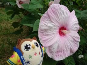 花巻温泉バラ園 開花状況(2020/8/26)