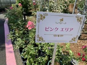 花巻温泉バラ園 開花状況(2020/9/9)