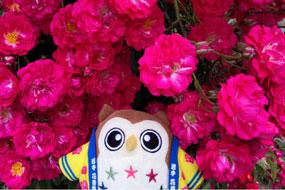 花巻温泉バラ園 開花状況(2021/6/22)