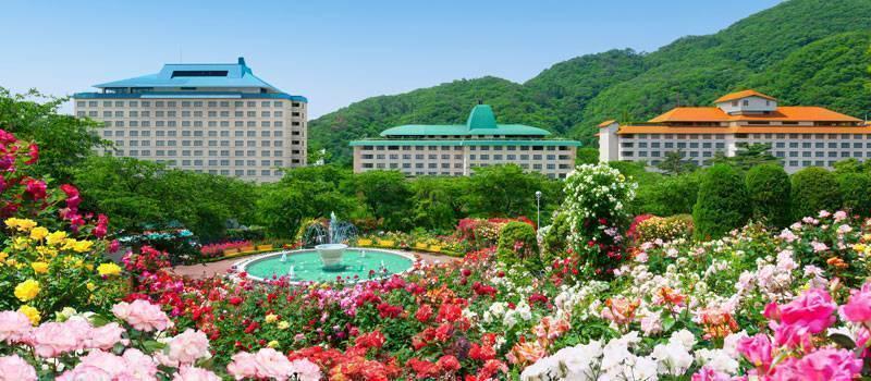 バラの最盛期(花巻温泉バラ園とホテル3館)