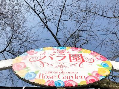 バラ園入り口 桜のつぼみがたくさん