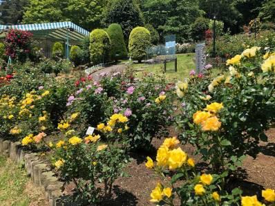 噴水周辺の花壇