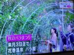 NHKニュースで「秋のバラまつり」が紹介されました!