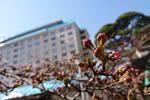 2019年 花巻温泉さくら便り(2019/4/17)