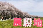 2019年 花巻温泉さくら便り(2019/4/21 ~号外 北上展勝地~)