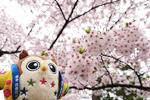 2019年 花巻温泉さくら便り(2019/4/26)