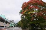 花巻温泉 もみじ便り♪(2019/10/17)