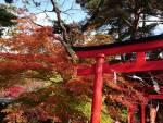 花巻温泉 もみじ便り(2020/11/9)