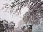 今年も花巻温泉に師走の雪が来ましたよ~♪