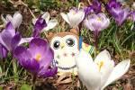 園内にチラホラ「春のお便り」