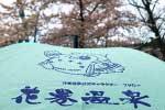 2021年 花巻温泉さくら便り(2021/4/17)